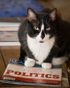 tuxedo-cat-information-800X800.jpg See more black and white cat at - Catsincare.com