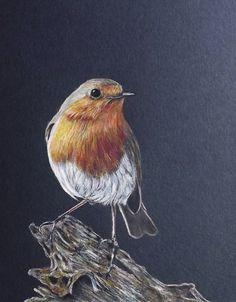 Glennis Weston COLORED PENCIL Robin