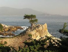 Along 17 Mile Drive in Monterrey, CA, there is this tree called 'The Lonely Cypress.'  There's some golf tournament that happens here too.  It's where Pebble Beach is located!