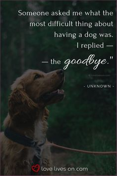 Jacob Arlo Maximus left us this morning I know he is no longer in pain and I& sure he is playing with his buddy Kain Roman. Mommy and Daddy will miss you so much. Love you our big boy! Pet Quotes Dog, Pet Loss Quotes, Dog Memes, Animal Quotes, Lost Dog Quotes, Dog Qoutes, Pet Loss Grief, Loss Of Dog, Losing A Dog Quotes
