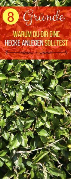 Winterharte Kübelpflanzen und Balkonpflanzen Balkon Pinterest - gartenpflanzen winterhart immergrun