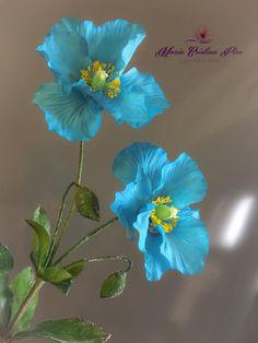 Himalayan Blue poppy by Piro Maria Cristina
