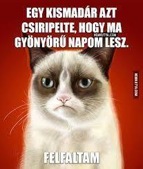 "Képtalálat a következőre: ""grumpy cat magyarul felirattal"" Bad Memes, Funny Memes, Cat Empire, Cat Whisperer, F2 Savannah Cat, Grumpy Cat Humor, Geek Humor, Queen Of Hearts, Funny Cats"