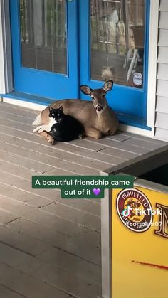 The love vibe. The love vibe. - Twitch Link below 🥰top tik tok videotik tok viral funny and cute video / vidéo marrant. Funny Animal Memes, Funny Animal Videos, Funny Animal Pictures, Cute Funny Animals, Cute Baby Animals, Funny Cute, Animals And Pets, Cute Cats, Cute Stories
