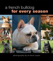 A French Bulldog for Every Season by Michele Copen, French bulldog breeder, exhibitor and photographer. Packed full of fabulous photos of stunning frenchies!