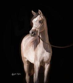 Horse Arabian Horses, Back To Black, Pictures, Animals, Beautiful Horses, Horses, Animais, Animales, Photos