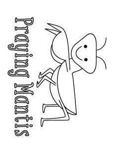 Praying Mantids Printout from EnchantedLearning.com
