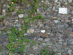 wall-texture-12 - wall-texture-12.JPG