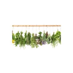Fresh Herbs Hanging Isolated on White. Basil, Rosemary, Thyme, Mint... ($24) ❤ liked on Polyvore featuring home, home decor, wall art, white home decor, photography wall art, white home accessories, white wall art and photography posters