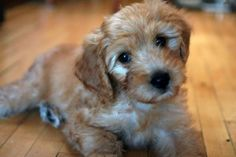 Mixed-Breed Dogs: The advantages
