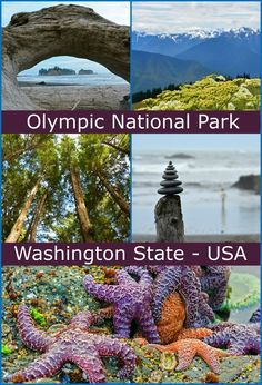 The Pacific Northwest at its BEST! Visit Olympic National Park in Washington State for some of America's finest natural attractions!