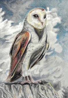 Barn Owl for a facebook drawing challenge - combining Derwent graphite pencils and Polychromos coloured pencils. Ref photo by Wendy Sinclair. Polychromos, Coloured Pencils, Drawing Challenge, Graphite, Needle Felting, Sculptures, Wildlife, Owl, Barn