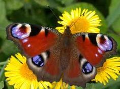 UNDER1ROOF - ABSOLUTELY BEAUTIFUL BUTTERFLY IN THE GARDEN TODAY