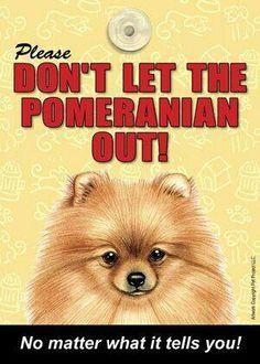 Pomeranian quote