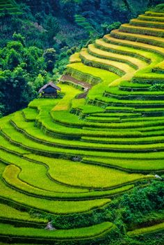 Mu Cang Chai, Vietnam this place is like the famous Banau Rice terraces of Ifugaos in the Philippines.