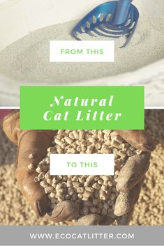 Find a natural and eco-friendly alternative to clay based cat litter. Natural Cat Litter, Baby Cats, Biodegradable Products, Eco Friendly, Alternative, Clay, Nature, Pets, Food