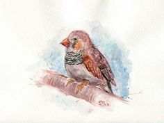 Original Watercolor Painting Of A Finch Or A Red Bird by StremArt