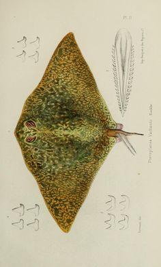 T.1 atlas (1883-1885) - Faune de la Sénégambie / - Biodiversity Heritage Library