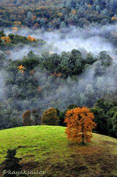 spots of autumn by kayaksailor