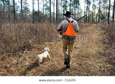 upland-bird-hunter-walking-through-the-piney-woods-followed-by-an-C16GF0.jpg (1300×953)