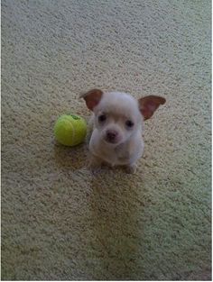 Play with me?