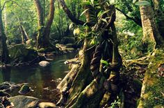 Pooyamkutty forest trail, Ernakulam, Kerala.