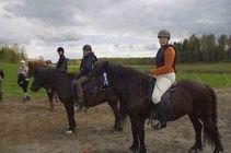 Tuntiratsastajien kisoissa sateli ruusukkeita Horses, Animals, Animales, Animaux, Animal, Animais, Horse