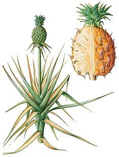 Pinterest the world s catalog of ideas - Plante d interieur facile d entretien ...