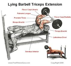 Lying barbell tricep extension 6 Sets x 8 Reps Chest Workouts, Gym Workouts, Swimming Workouts, Swimming Tips, Mens Fitness, Fitness Tips, Workout Fitness, Fitness Products, Cycling Workout
