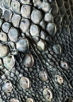 Leopard Gecko Skin Macro by Nick.Baumgartner, via Flickr
