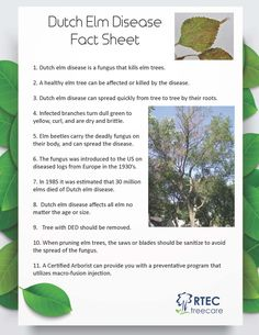 Dutch Elm Disease Fact Sheet - Tree Diseases