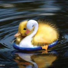 Baby duck on float