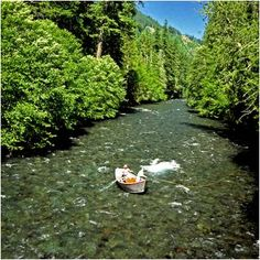 McKenzie River, Oregon - I once floated this river with friends - what a wonderful day, great memories! Oregon Camping, Oregon Travel, Trout Fishing, Fly Fishing, Wonderful Places, Beautiful Places, Oregon Mountains, Destin Fishing, Swimming Holes