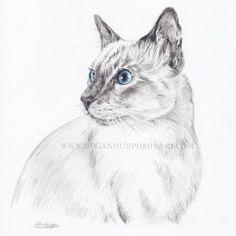 Scan of @lefusadi   ✏ #art #drawing #cat #pencil #nawden #potpourriofartists #animalcreatives #triplesartists #catstagram #pet #petportrait #petsagram #animal #petsofinstagram #kitty #eyes #blueeyes #petportrait #like #instaart #cat lover #siamese...