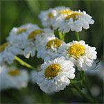 Plant a Cutting Garden, Cutting Garden Flowers: Gardener's Supply