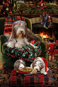 """New for 2014! Bearded Collie Christmas Holiday Cards are 8 1/2"""" x 5 1/2"""" and come in packages of 12 cards. One design per package. All designs include envelopes, your personal message, and choice of greeting.Select the inside greeting of your choice from the menu below.Add your custom personal message to the Comments box during checkout."""