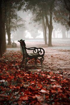 Bank / Gartenbank / Parkbank - Bench in the Park / Garden Bench - Herbst / Autumn / Fall Beautiful World, Beautiful Places, Beautiful Pictures, Autumn Scenery, Belle Photo, Beautiful Landscapes, Mists, Serenity, Nature Photography