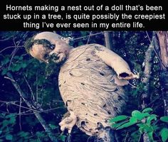 I think dolls are creepy, and Im allergic to hornets. So yep, this is a nightmare. Weird Facts, Fun Facts, Funny Cute, Hilarious, Creepy Stories, Macabre, In This World, Funny Pictures, Funny Memes