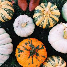 "my-spooky-autumn: "" :: Happy first day of Halloween from me + my pumpkin friends! Pumpkin Leaves, Autumn Leaves, Red Leaves, Autumn Cozy, Fall Winter, Autumn Aesthetic, Seasons Of The Year, Cute Pumpkin, Fall Is Here"