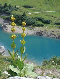 Bergsommer in Lech: Erfrischende Bergseen laden zum Rasten & Entspannen ein Berg, Wanderlust, River, Outdoor, Ski, Fishing, Swim, Summer, Nature
