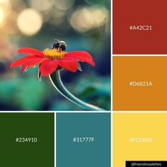 Flowers | Warm | Fall |Color Palette Inspiration. | Digital Art Palette And Brand Color Palette.