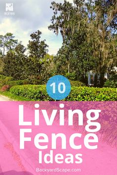 Living fence ideas are a great way to add privacy and bring more natural security to your backyard. Backyard Fences, Backyard Projects, Outdoor Projects, Backyard Landscaping, Landscaping Ideas, Outdoor Decor, Natural Privacy Fences, Natural Fence, Fence Ideas