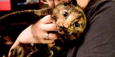 Are All Torties Female?