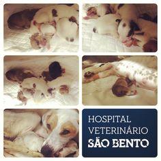 Quantos bebes conseguem contar na segunda imagem à esquerda? A Lolita foi mãe na semana passada e esteve connosco por hipocalcemia, uma situação comum pós-parto. Felizmente já teve alta :)