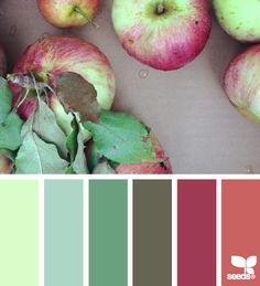 Picked Palette - http://design-seeds.com/index.php/home/entry/picked-palette2