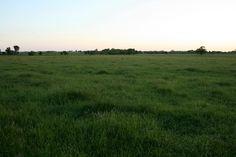 Green Kansas | Flickr - Photo Sharing!