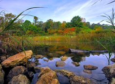 Owen Conservation Park - Forests - Enjoy some quiet time in this relaxing park teeming with nature's beauty everyone will appreciate at Owen Conservation Park