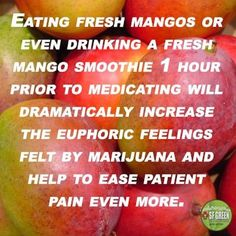 Eat Fresh Mangos Before Smoking Marijuana fruit pot weed marijuana interesting health remedies remedy mangos life hacks life hack