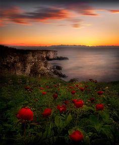 Sunrise with wild peonies at the Bulgarian Black Sea Coast