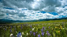 Wild flowers on the hills of Ogden Valley - Jim Halay